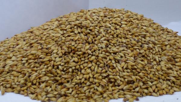 Lesen und beurteilen einer Malzanalyse Qualitätsmerkmale des Rohstoffs Malz