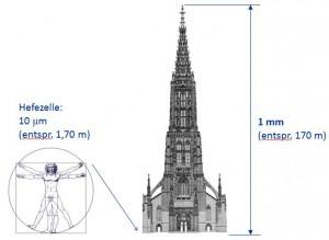 ulm-vergleich